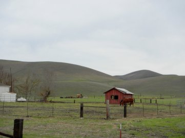 Manning Rd-horse ranch