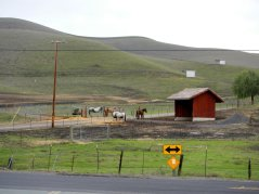 Carneal Rd-horse ranch