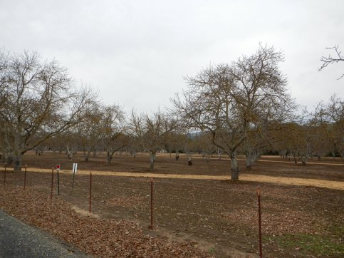 Camino Tassajara-orchard