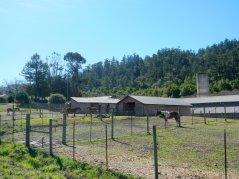 Stewart Horse Ranch