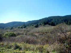 Pt Reyes Nat'l Seashore-woodlands