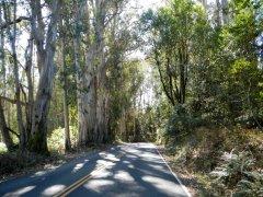 descend eucalyptus groves