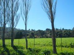 Bolinas open land