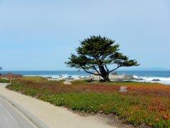 gorgeous cypress