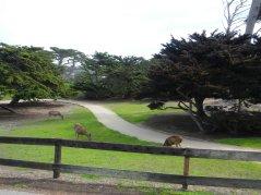 deer on the greens