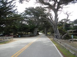 17 Mile Dr-cypress forest