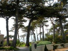 17 Mile Dr-ocean views