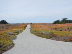 path to the beach area