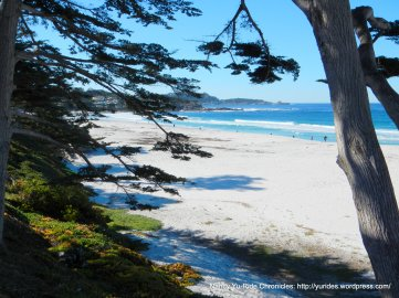 Carmel State Beach & Park
