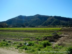 Earthbound Farms