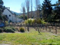 Chateau Julian Winery Estate vines