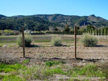 agricultural farmland