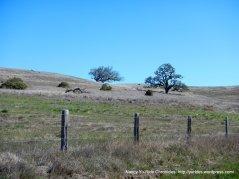 oak studded hill