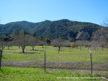 Carmel Valley orchard