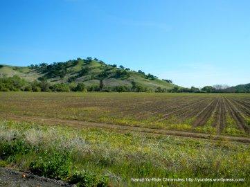 agricultural lands
