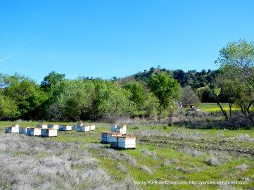 bee farms
