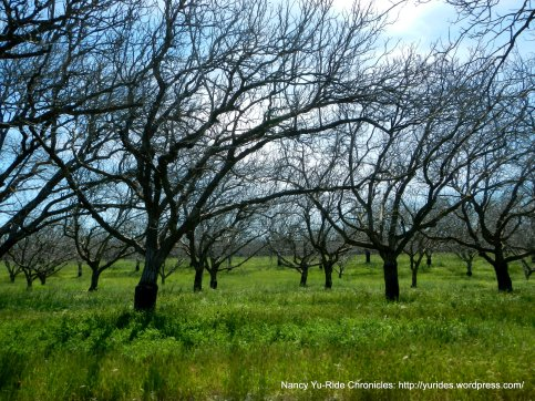 Putah Creek Rd orchards