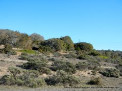 Fort Ord NM landscape