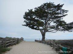 Monterey State Beach-cypress