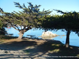 view thru the trees