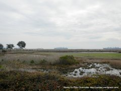 wetlands/marshes-Suisun Bay