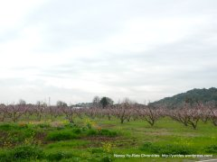 nut orchard