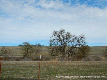 oak studded hills