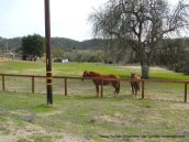 horse ranch-Linne Rd