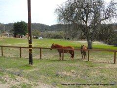 horse ranch-Linne Rd