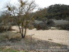 dry riparian landscape