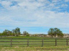 pastoral field