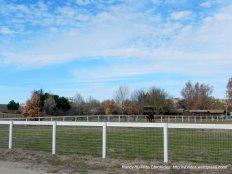 equine facilities