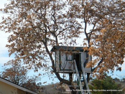 tree house-Geneseo Rd