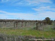 Geneseo Rd vines
