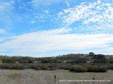 Union Rd landscape