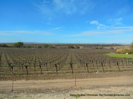 Union Rd vineyards