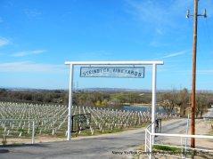 Steinbeck vineyards