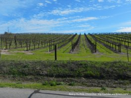 Union Rd vineyards