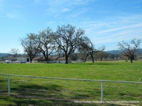 green pasture lands