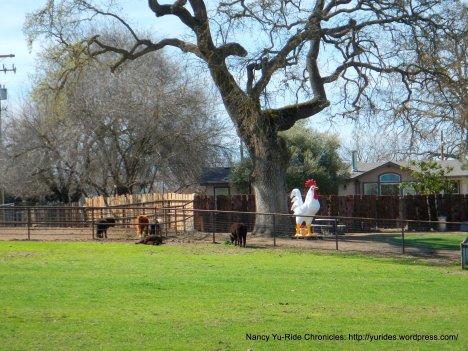 foghorn leghorn ranch