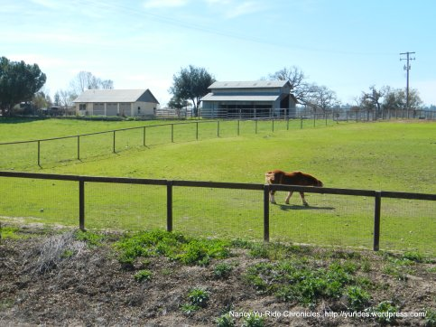 horse ranches