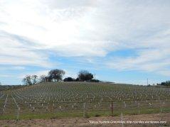 rolling vineyard