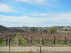 Cass vineyards