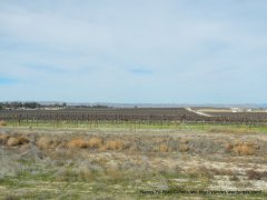 Paso vineyards