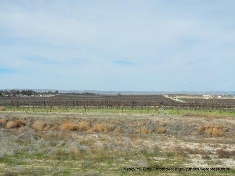 Paso vineyards