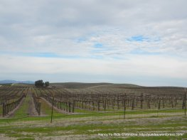 Airport Rd-wine trail