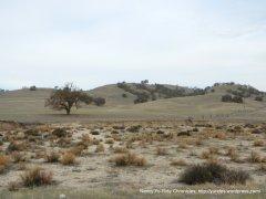 dry desert like landscape