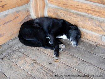 Parkfield Cafe V6 Ranch dog