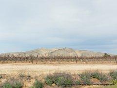 golden hill vines