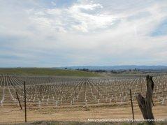 acreage vineyards